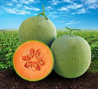 Pot Orange  T1957